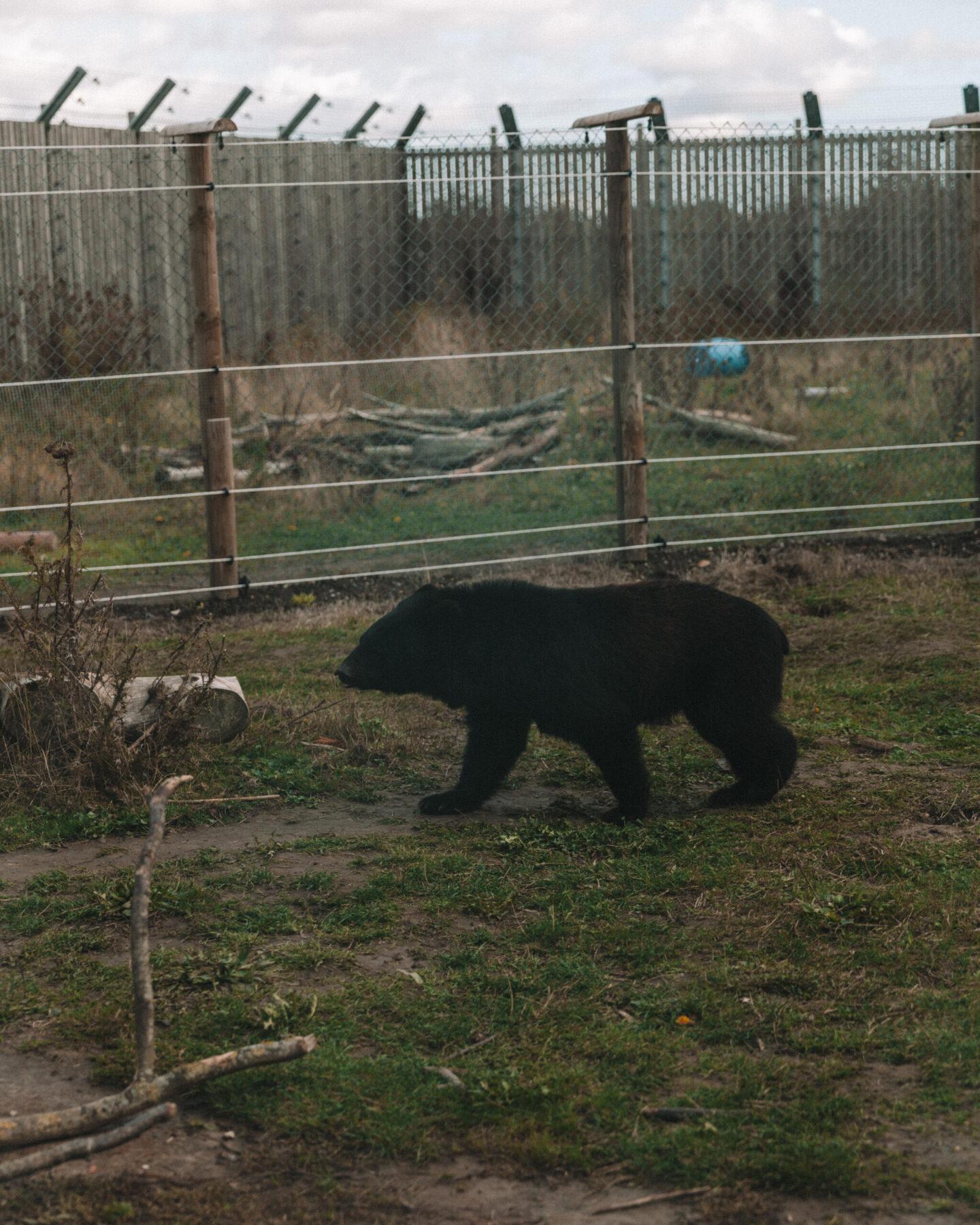 Wingham-Wildlife-Park-05