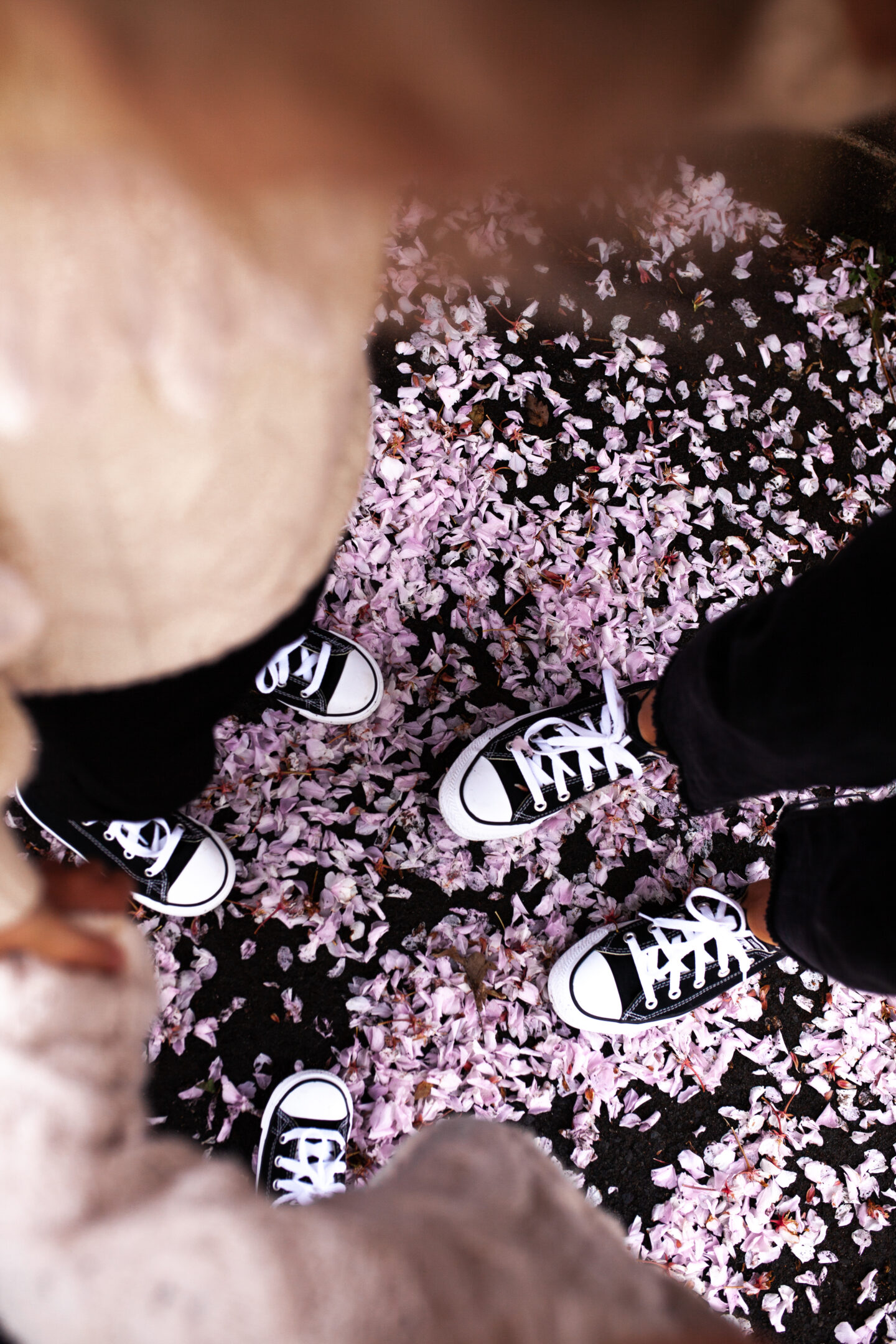 Family_Matching_Converse_06